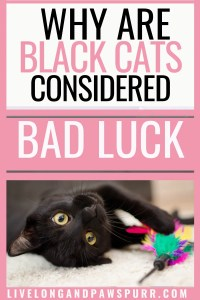 why are black cats considered bad luck #badluck