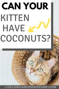 Can Your Kitten Have Coconuts #coconuts #cancatseats #catfood #catquestion