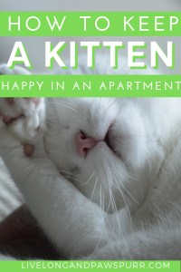 keep a cat happy in a small apartment
