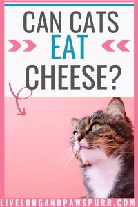 can cats have cheese? #catquestions #catfacts #cancatseat