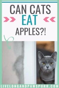 Can I Give My Cat Apples