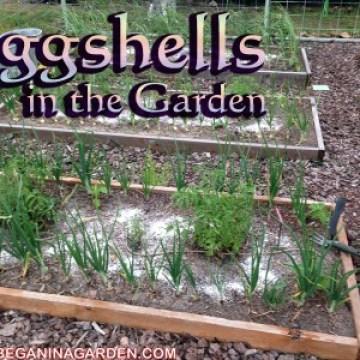 Composting with Eggshells