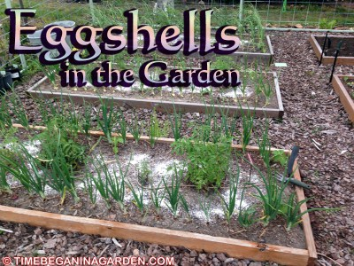 Composting with Eggshells