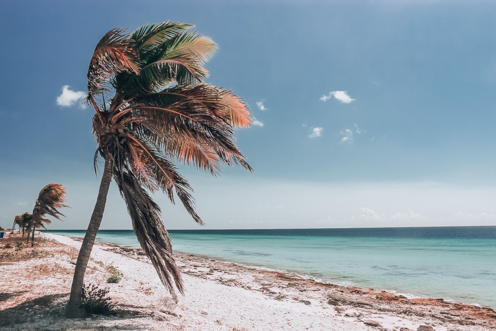 Palm tree on pink sand beach in Bonaire