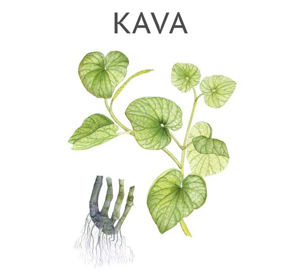 Buy Kava Root