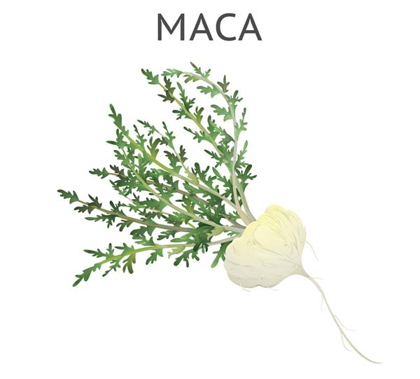 Buy Maca Root