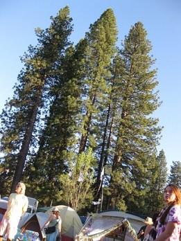 High Sierra 2010