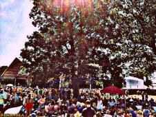 The Infamous Stringdusters and Other Tent Tree of Life @ Bonnaroo 2012 || Photo by Stephen Taylor