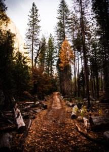 Path of purpose