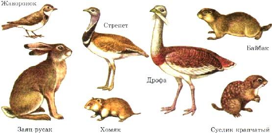 Степные животные; животные в степной зоне России, обитание ...