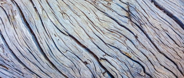 Twisted tree bark