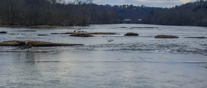 Geese on the Chattahoochee