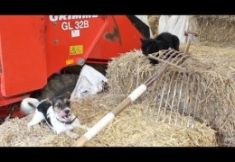 Farm Feast: Robert Vincent (yappy dog version)