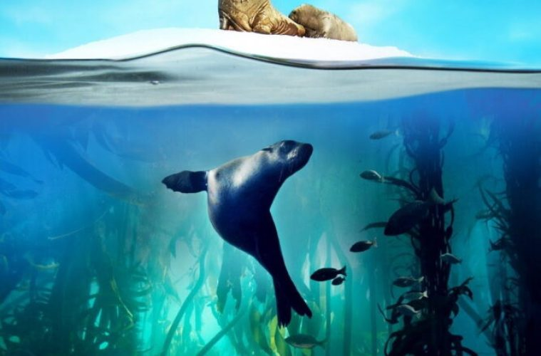 Blue Planet II  *Live In Concert* Tour Coming To Liverpool Echo Arena