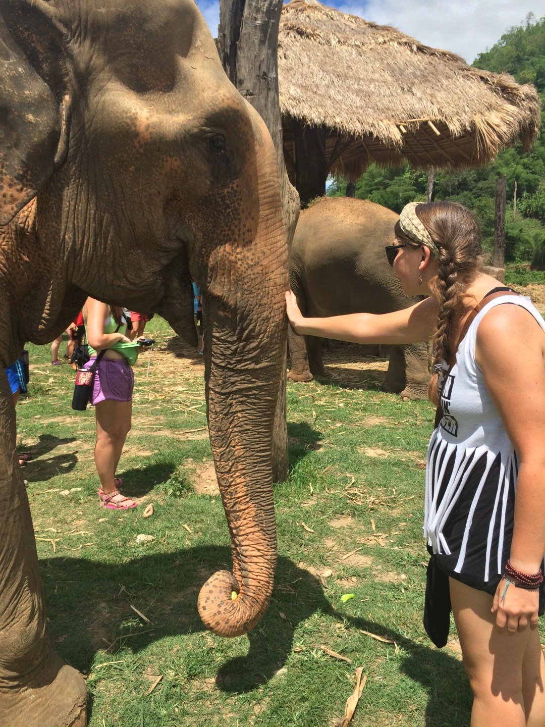 Petting elephants at the Elephant Nature Park