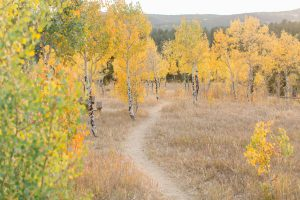 Fall foliage lined path in the woods