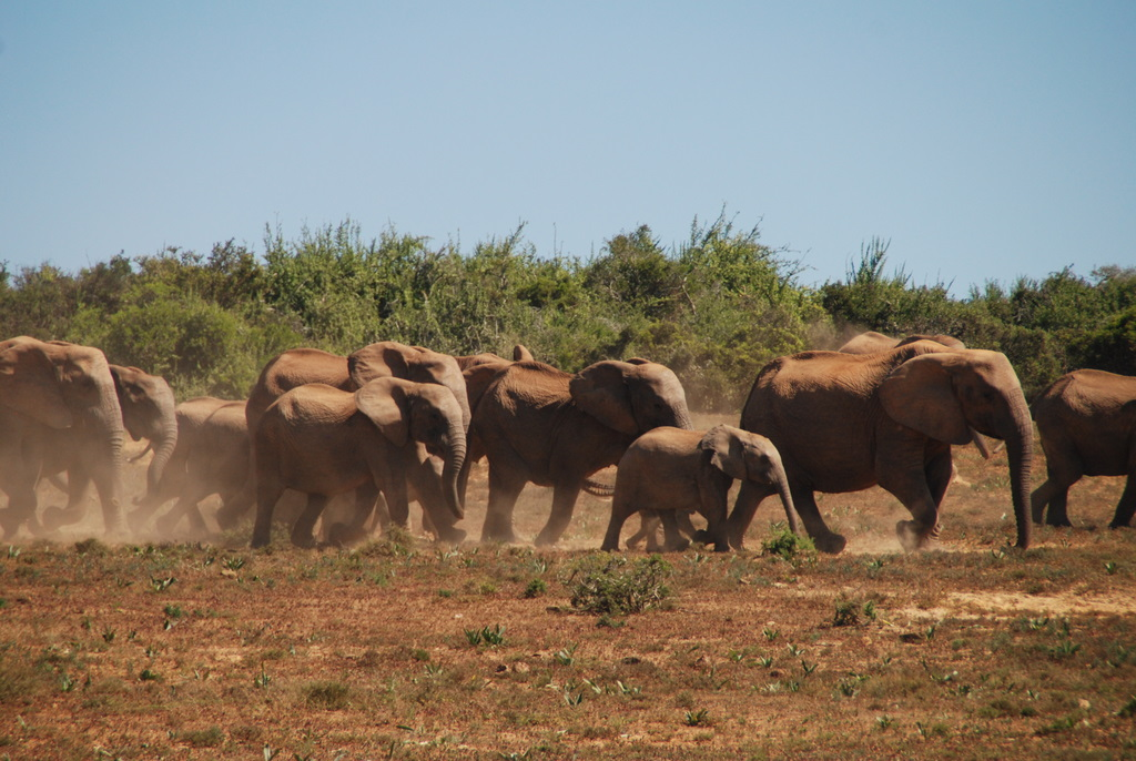 Elephants in Abundance