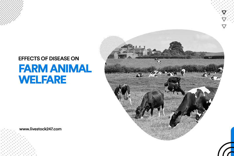 Effects of Disease on Farm Animal Welfare