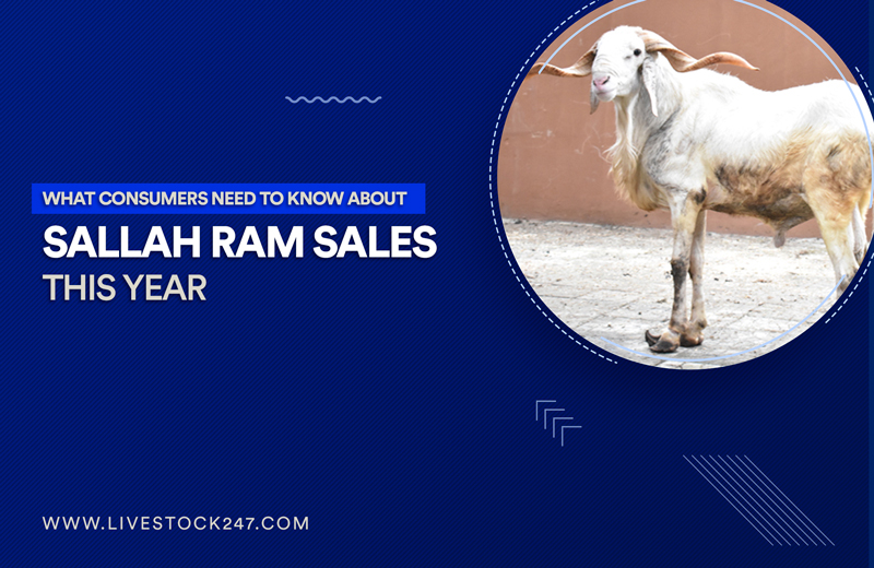 What Consumers Need to Know About Sallah Ram Sales This Year