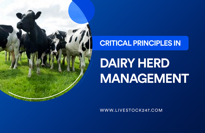 Critical Principles in Dairy Herd Management
