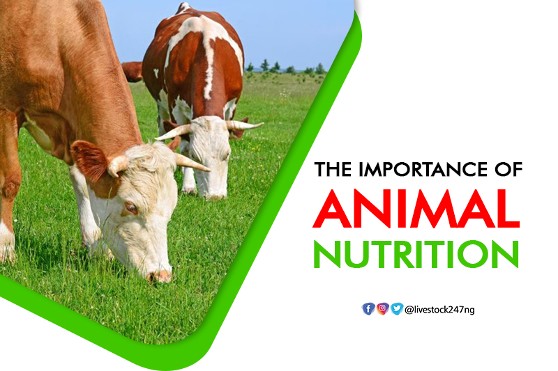 The Importance of Animal Nutrition