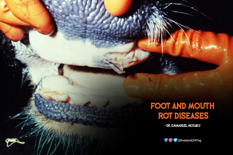 Foot and Mouth Rot Disease