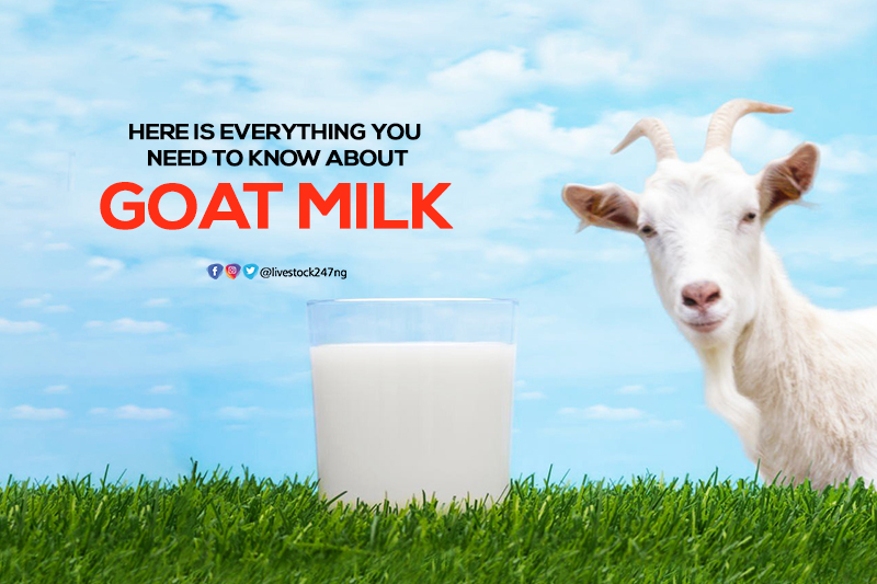 Here is Everything You Need to Know About Goat Milk