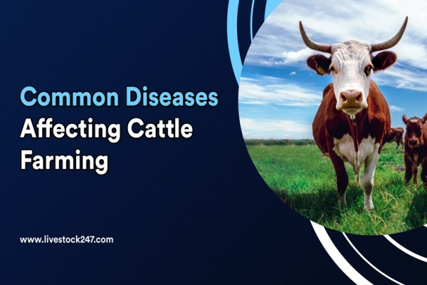 Common diseases affecting cattle farming