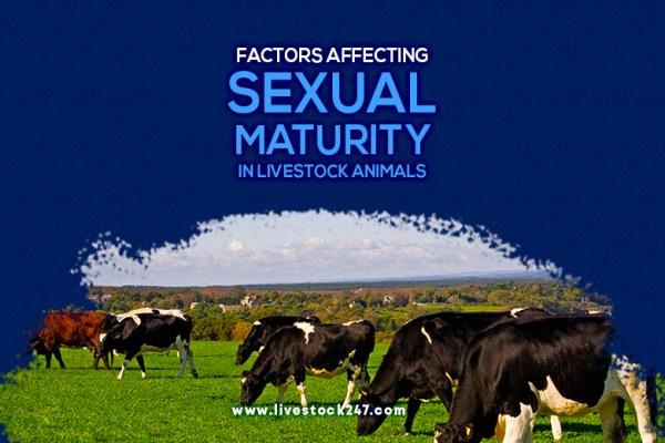 Factors Affecting Sexual Maturity in Livestock-Animals