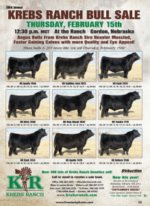 Krebs Ranch Bull Sale @ At the ranch | Gordon | Nebraska | United States