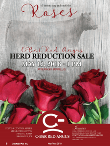C-Bar Red Angus Herd Reduction Sale @ At the ranch