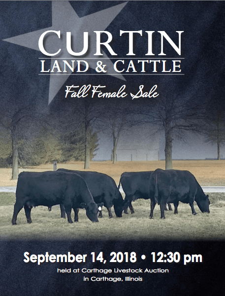Curtin Land & Cattle Fall Female Sale on 9/14/18