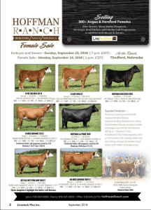 Hoffman Ranch Female Sale @ Hoffman Ranch | Thedford | Nebraska | United States