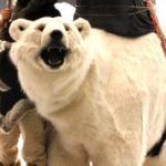 Lifesize Polar Bear