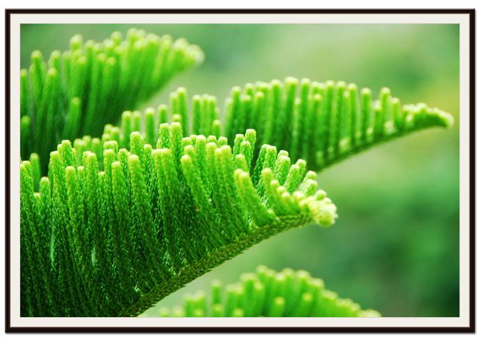 Pine UpClose