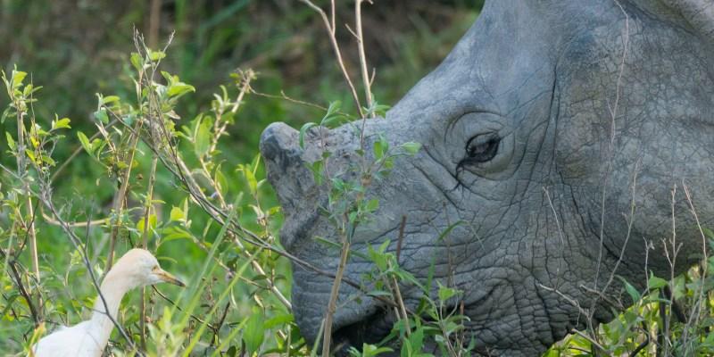 Wild Wild Kaziranga… the home of one horned Rhino