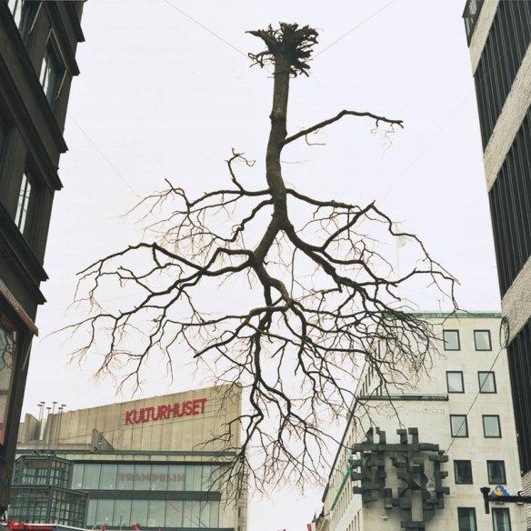 Träd som hänger upp och ner.