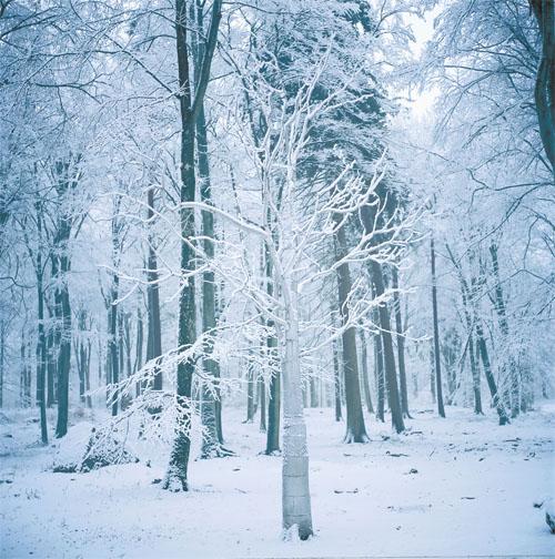 Träd i metall i en skog.