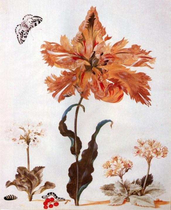En illustration som visar en papegojtulpan och några andra blommor mot en vit bakgrund. Längst ned i bild syns även ett par larver.