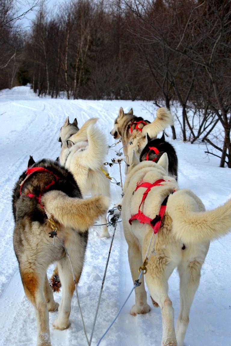 huskies-333625