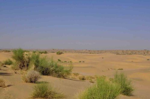 best place for camel safari in india