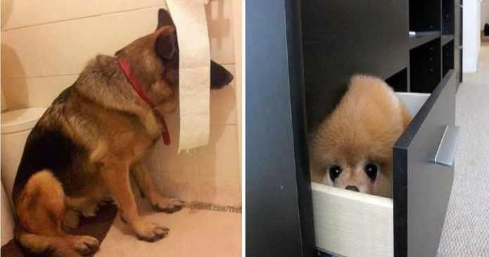 19 câini care au crezut că au găsit ascunzătoarea perfectă