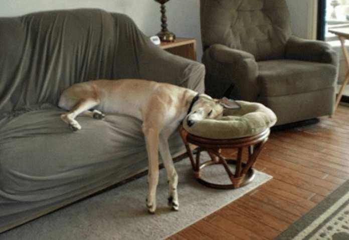 Cincisprezece poziții incredibile în care pot să doarmă cățeii!