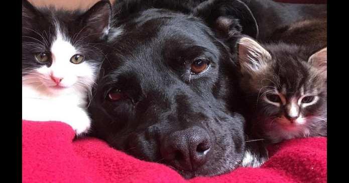 Un câine are grija de pisici după ce și-a pierdut cel mai bun prieten. Asta dovedește că animalele au suflet!