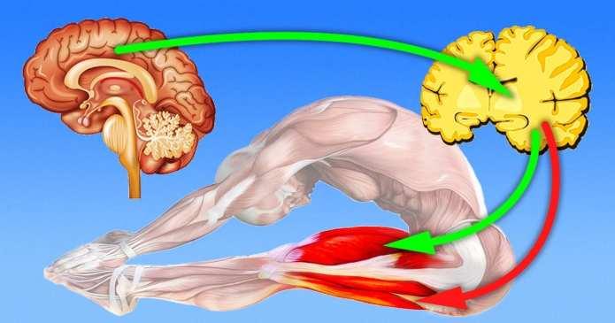 10 Exerciții pentru spate pe care le puteți face pentru scapa de dureri si a vă intari musculatura