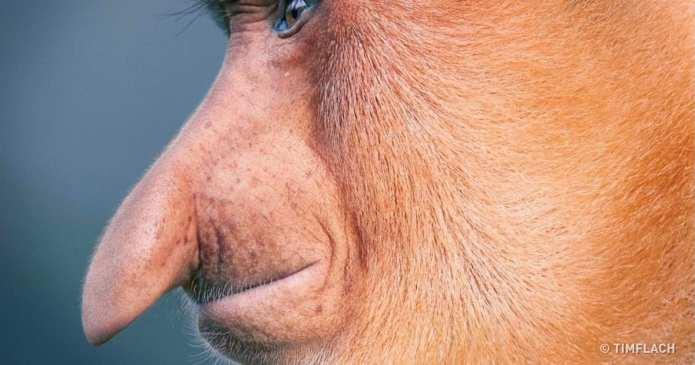 Un fotograf a călătorit în lume pentru a face fotografii animalelor care ar putea fi pe cale de disparitie