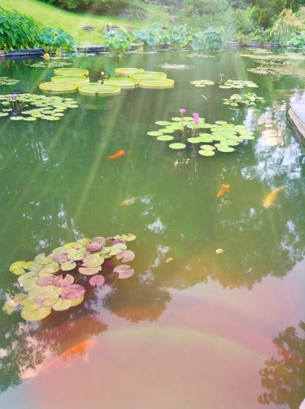 Meditation-in-Nature-Walking-Through-Enchanted-Gardens-Five-LiWBF