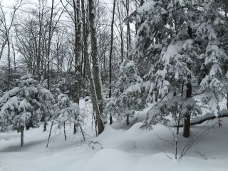 IMG_1849 northern michigan snowy hillside