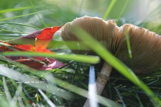 up close of grass, mushroom and fall leaf
