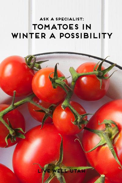 winter-tomatoes